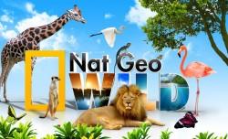 В ноябре Nat Geo Wild покажет лучшие программы о дикой природе