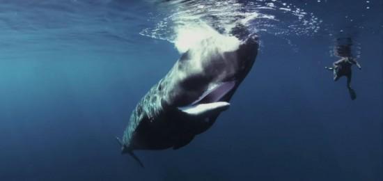 Discovery Channel запускает новый проект под названием «Оглушающий океан»