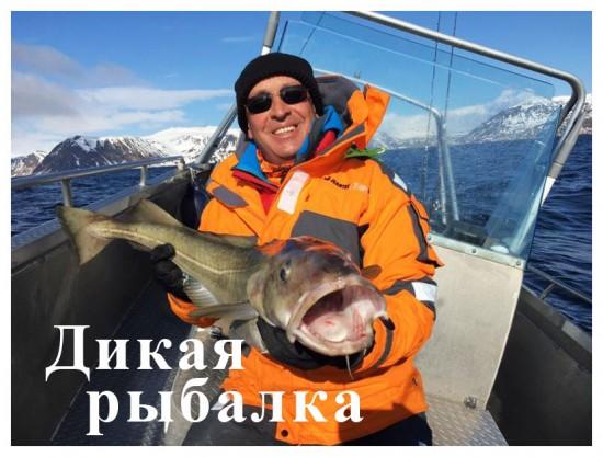 3 тематических канала: «Дикий», «Дикая охота» и «Дикая рыбалка»